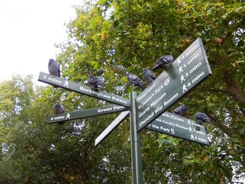 ロンドン セント・ジェームズ・パーク
