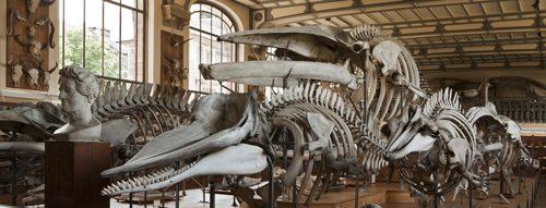 自然史博物館 パリ
